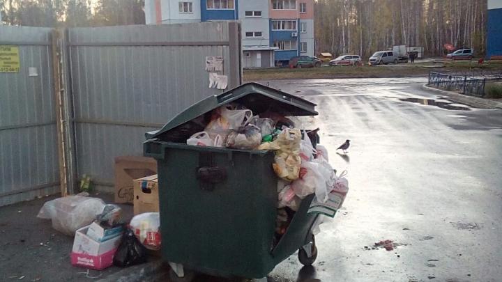 Челябинцы засекли мусоровозы, которые подбрасывают в их контейнеры чужие отходы