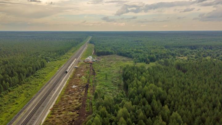 В районе станции Шиес незаконно вырубили лес на 1,4 миллиона рублей