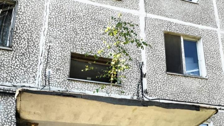 «Растет в Волгограде березка»: по мотивам песни Агашиной на волгоградских домах проросли деревья