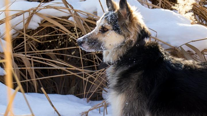 «Прыгала до неба»: спустя два месяца житель Татарстана нашел пропавшую в Уфе собаку