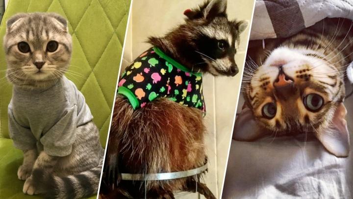 Енотик в рубашке, кот в футболке: смотрим, как тюменцы и их питомцы проводят осень (это очень мило)