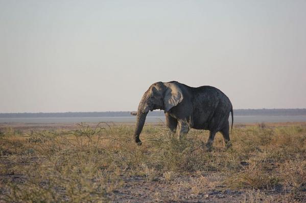 В Африку туристы едут прежде всего ради сафари, мечтая поймать в объектив главные символы континента