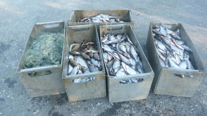Браконьерство по-крупному: двое жителей Ярославской области наловили в реке рыбы на миллион рублей