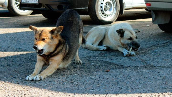 Мишаня и Халява: знакомимся с собаками, которые следят за ДТП на Демьяна Бедного