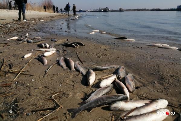 Одной из причин мора рыбы мог стать сброс химикатов