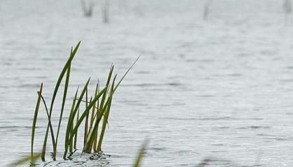 В Курганской области семилетняя девочка упала с обрыва в реку и утонула