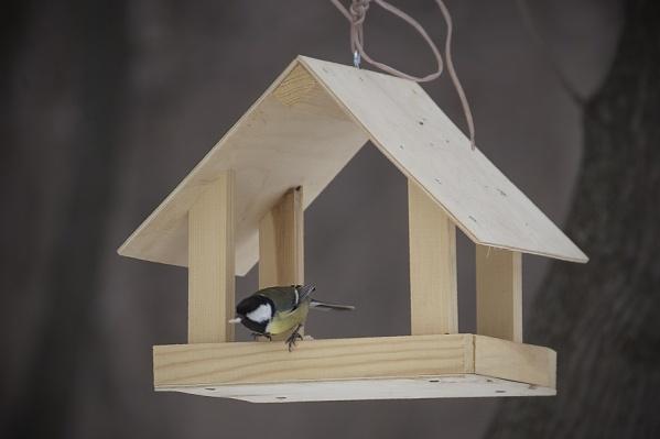 Густой пух и перья птиц позволяют им защитить тело от энергопотерь
