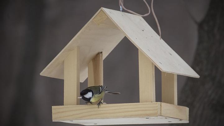 Синицам — сало, воробьям — горох: как спасти городских птиц от голодной смерти