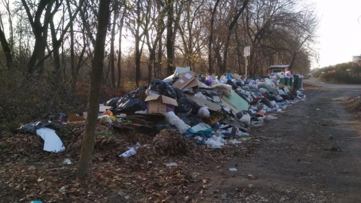 В ДНТ «Березка» не вывозят мусор из-за долга перед регоператором. Теперь там огромная свалка