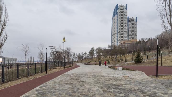 «Не уверен, дойдут ли деньги»: волгоградцам продают деревья в парке за 142 бюджетных миллиона
