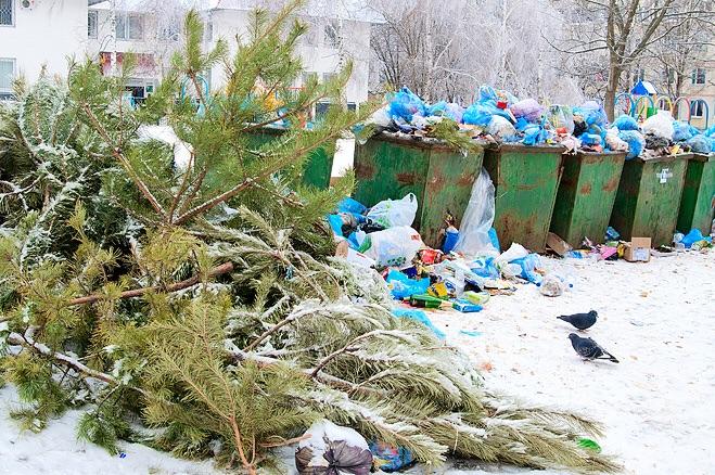 Некоторые хвойные все же донесли до мусорных свалок
