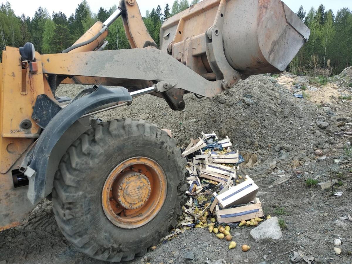 В Екатеринбурге уничтожили больше тонны груш, которые незаконно привезли из Бангладеш