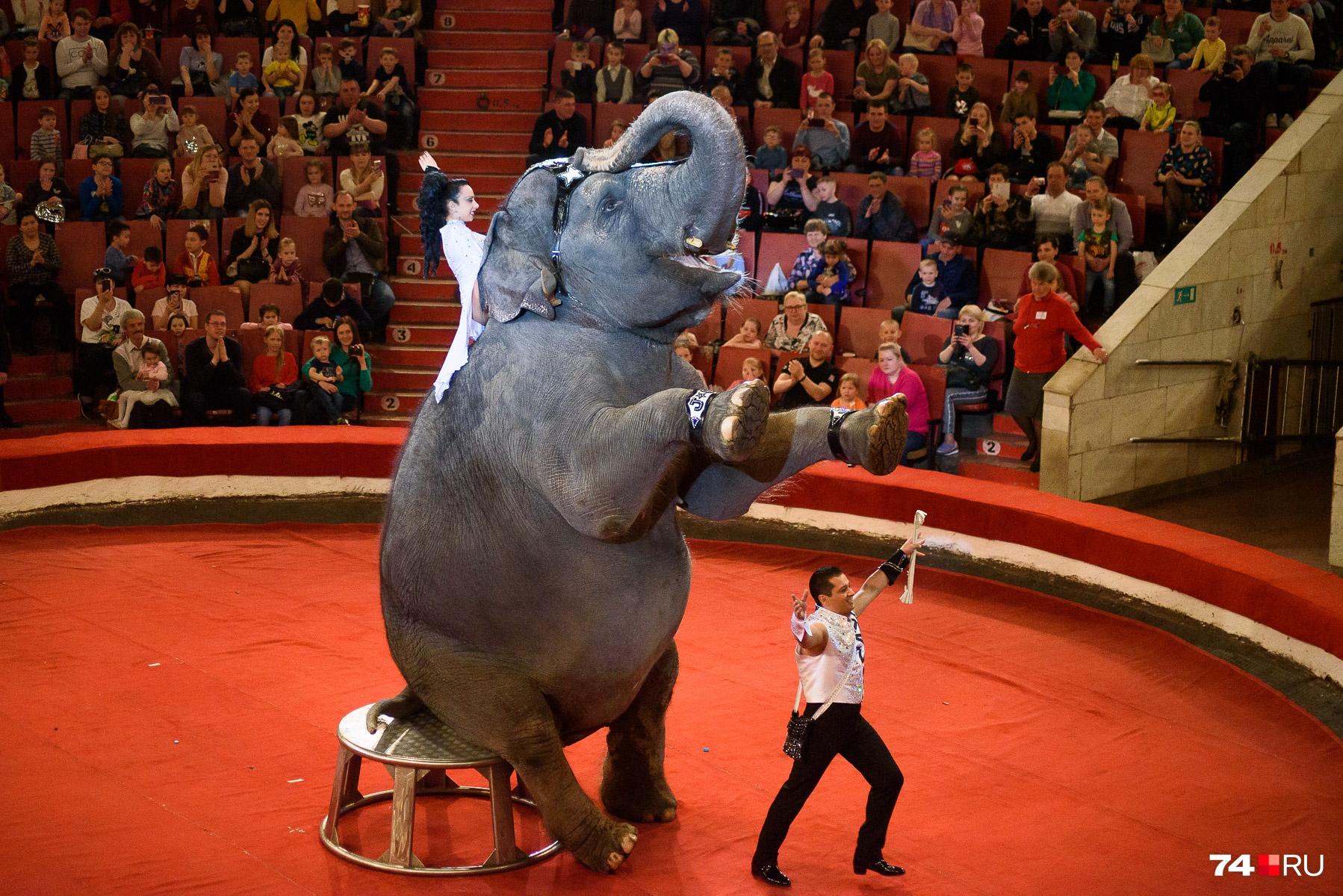 Руководитель номера — дрессировщик Кристиан Гертнер, артист цирка впятом поколении.