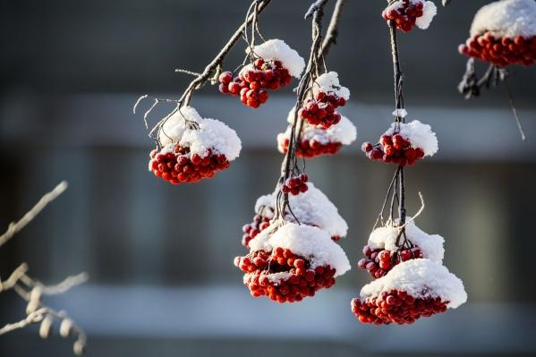На ближайшие дни синоптики прогнозируют снегопады и лёгкие морозы