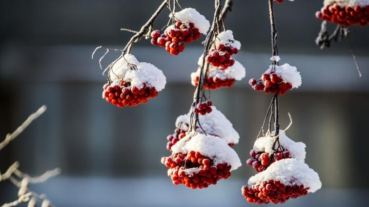 Снега на всех хватит: Новосибирск накроют мощные метели