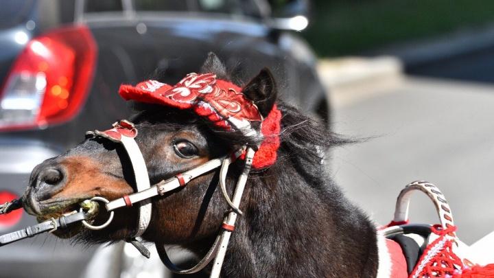 Опасны для детей: в центре Ярославля устроили облаву на лошадей