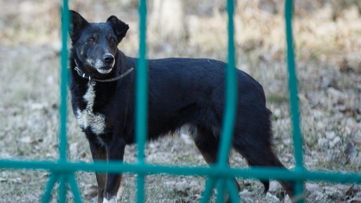 В Волгограде сотня зоозащитников выйдут митинговать против расстрела собак