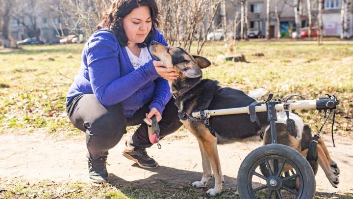 «Я кричала, чтобы её не усыпляли»: ярославна исцелилась от бесплодия после спасения собаки-инвалида