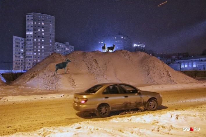 Эту снежную кучу наш фотограф приметил неподалеку от стадиона«Динамо». А дизайнер предположила, что на фото не хватает только горных коз