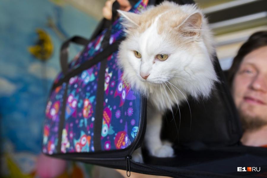 Авиакомпания «Аэрофлот» ужесточила правила транспортировки животных всалоне самолета