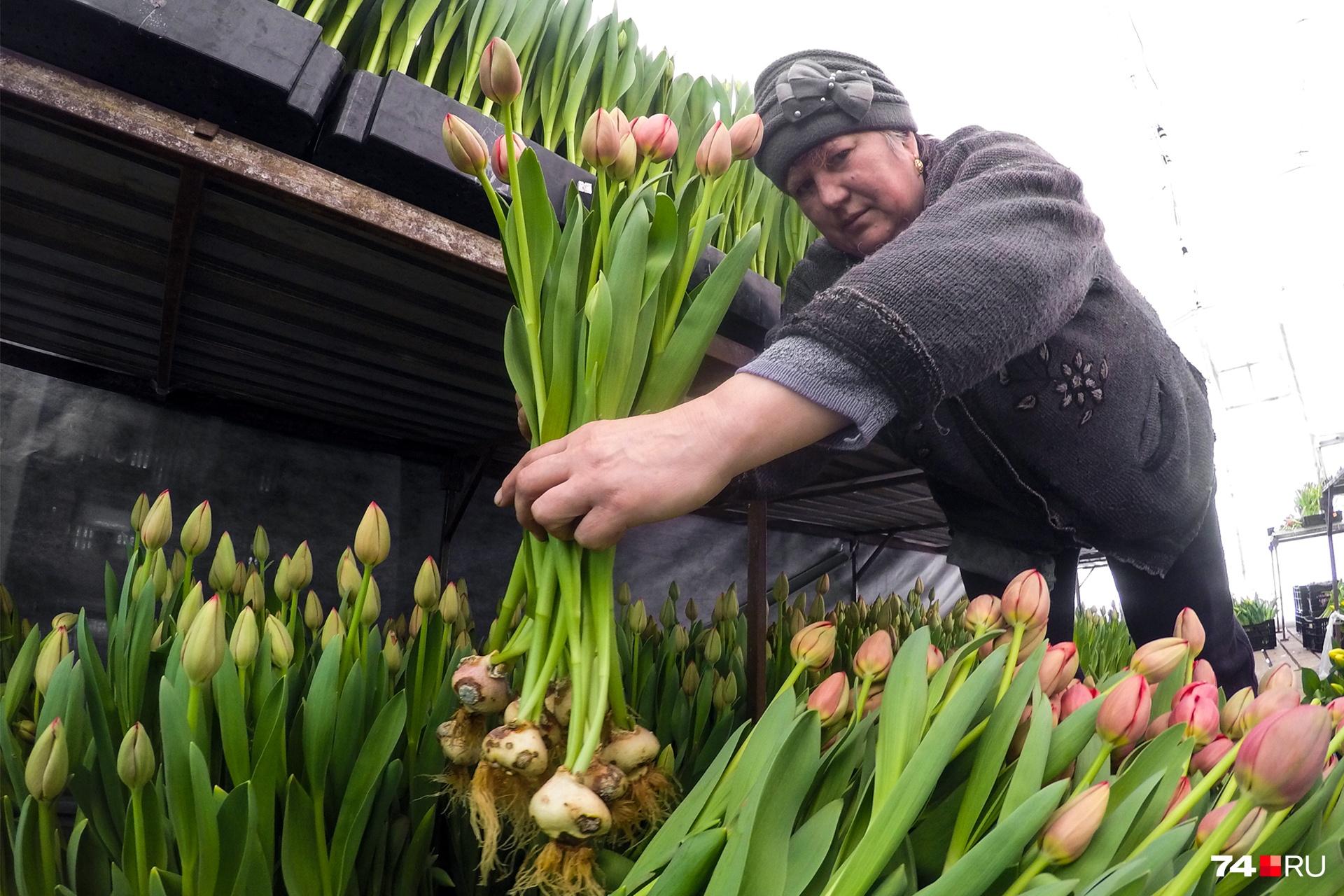 Сотрудницы теплицы мечтают, чтобы им дарили букеты не из тюльпанов