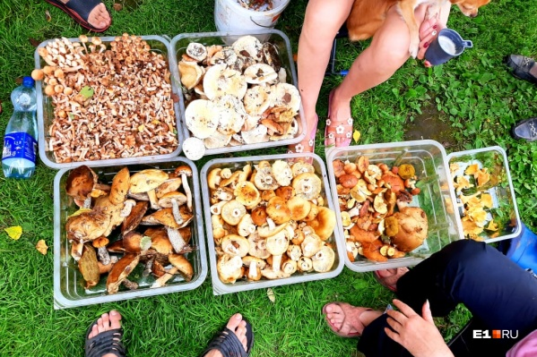 В общей сложности грибники собрали шесть ведер грибов