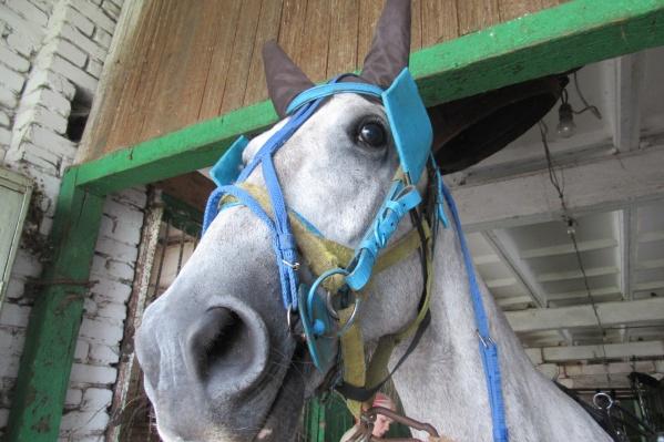 Лошадки выйдут на старт уже 1 июня