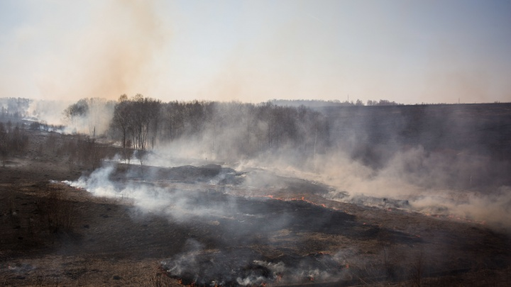МЧС назвало главную причину пожаров в лесах и полях — это новосибирцы