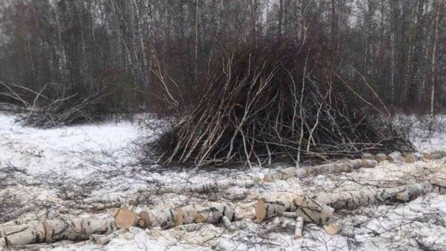 «Ведут себя по-хамски»: челябинцев встревожила большая вырубка деревьев на Северо-Западе