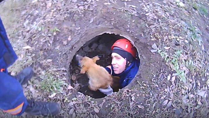 Спасатели вытащили щенка из двухметровой ямы
