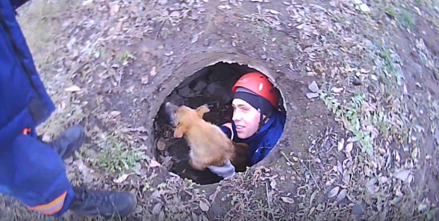 ВНовосибирске cотрудники экстренных служб достали изколодца щенка