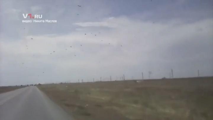 Атакующие Волгоградскую область полчища саранчи попали на видео