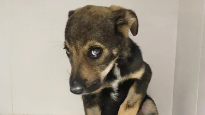 Самая стеснительная собака из Волгограда покорила интернет своим взглядом