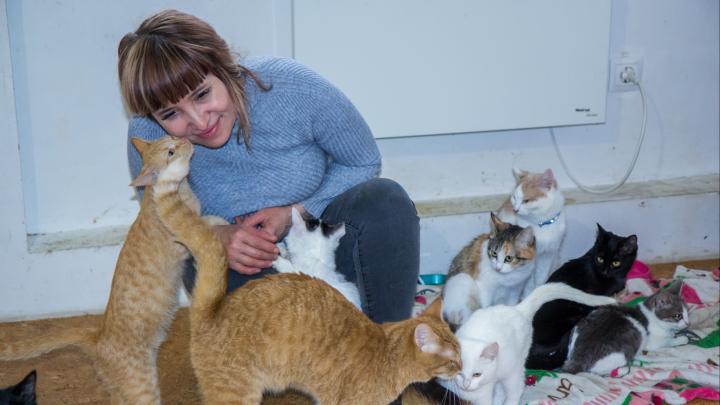 «Их жизнь зависит от меня»: уфимка победила рак и бросила бизнес ради 120 собак и кошек