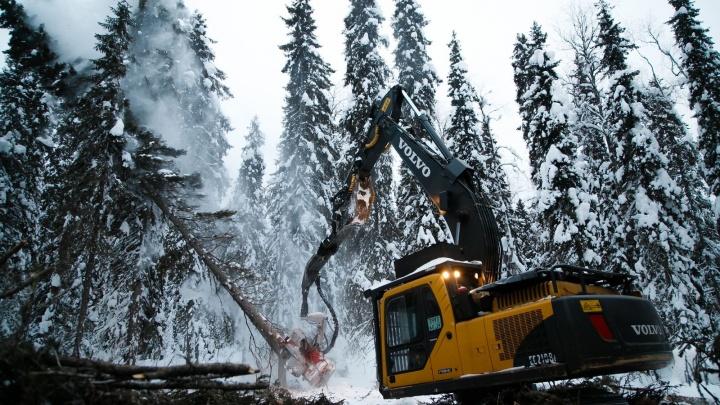 Леспромхозы ГК «Титан» заготовили более четырех миллионов кубометров древесины за 2019 год