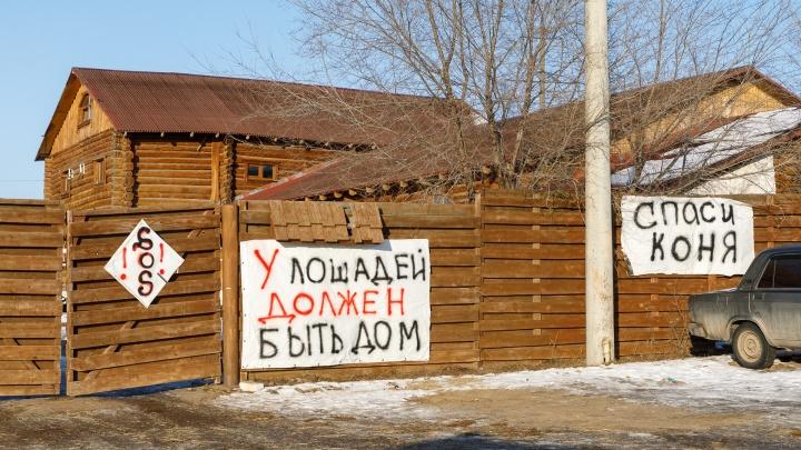 «Лихачёв и Бочаров не заинтересованы в негативе»: в Волгограде «Сосновый бор» договаривается с мэрией