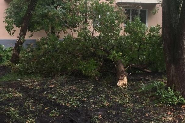 В Уфе на припаркованный на газоне автомобиль упало дерево