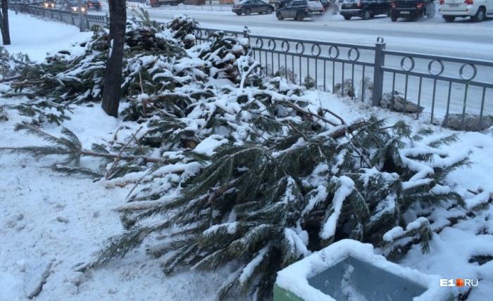 Елки, выброшенные торговцами в одном из районов Екатеринбурга сразу после Нового года
