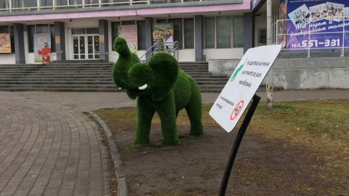 «Надеюсь, что смогу жить здесь вечно»: курганский зеленый слон завел аккаунт вTwitter