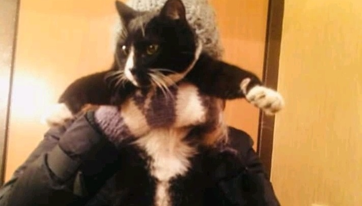 Путешествие Марио: кот прошел 25 километров до Екатеринбурга, чтобы найти хозяина