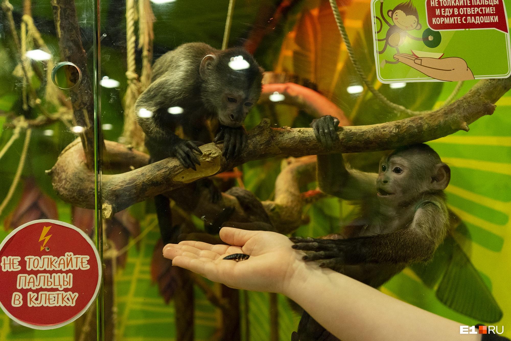 Тимоша (слева) раньше не любил насекомых, а теперь с удовольствием их ест