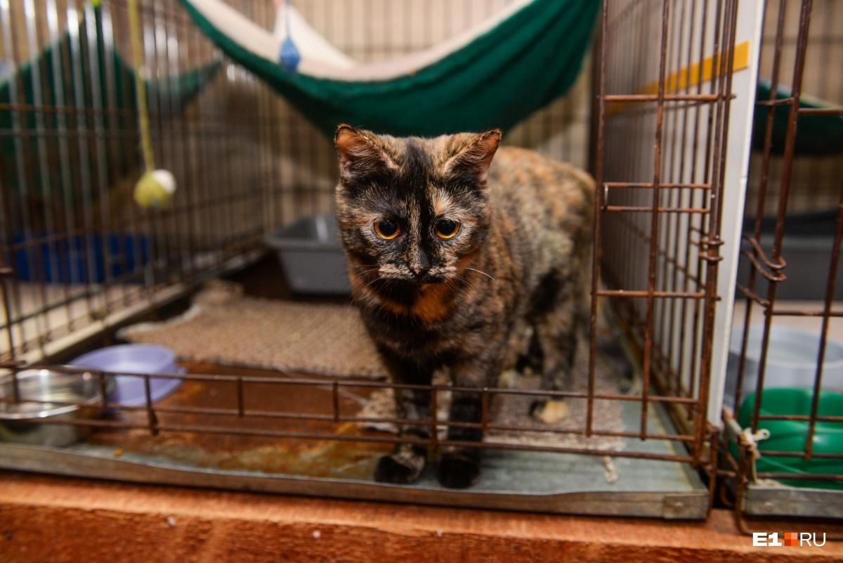 Беретта. Имена кошкам выбирают по темам. Когда в центре появилась эта кошка, был месяц оружия, поэтому она Беретта