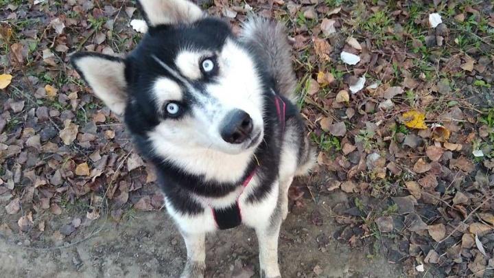 Милые пушистые собаки собрались под Новосибирском — выбирают самую быструю