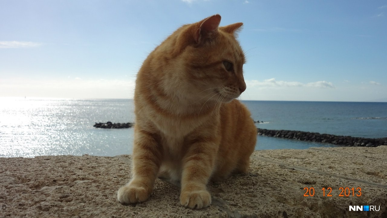 Портовый котик
