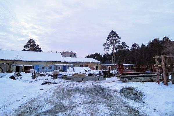 Несколько реликтовых сосен попали на территорию стройплощадки
