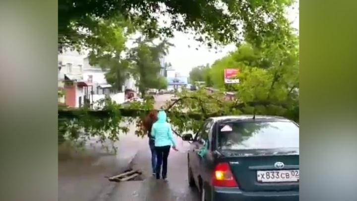 В Уфе упавшее от ветра дерево перегородило проезжую часть