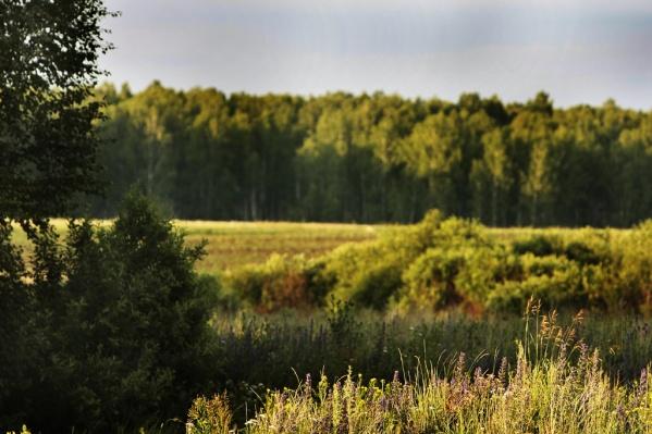 Жителей просят быть внимательными во время прогулок по лесу