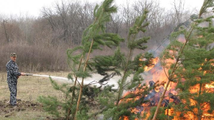 Осень без шашлыка: в Волгоградской области запретили отдыхать в лесах