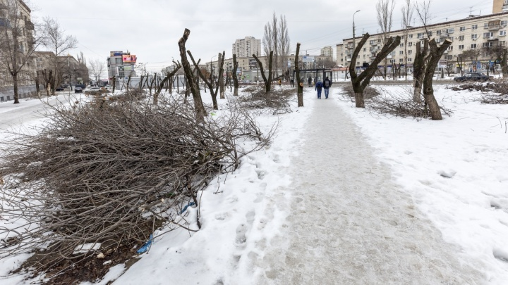 «Везти некуда»: центр Волгограда превратился в замусоренную пустыню с лысыми деревьями