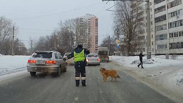 В Челябинске инспектор ГИБДД остановил машины, чтобы перевести через улицу хромую собачку